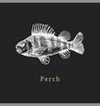 perch on black background fish vector image vector image
