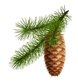 Pine cone with branch vector image