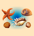 set graphic hand drawn seashells and starfish vector image