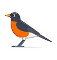 american robin bird on a white background vector image vector image