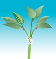 coffee plant vector image vector image