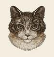 drawn portrait cute kitten cat animal pet vector image vector image