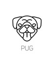 pug tongue out dog breed linear face icon vector image vector image
