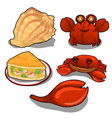 Set of crab cake and sea shells isolated vector image