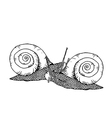 Two line drawing snails vector image vector image