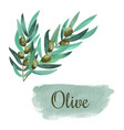 watercolor olive branch card hand drawn vector image vector image