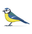 blue tit bird on a white background vector image vector image