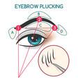 eyebrow plucking vector image