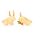 rabbit eating carrots closeup vector image vector image