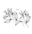vanilla flower and leaf hand drawn botanical vector image vector image