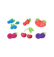 isolated fresh berries with slices collection vector image