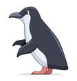 little penguin bird on a white background vector image vector image