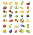 Mixed fruit vector image vector image