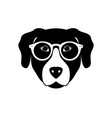 portrait of labrador retriever in glasses vector image