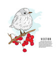 small bird on a twig nature vector image