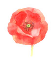 beautiful red poppy vector image