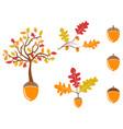 color oak acorn icons set vector image