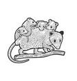 opossum mom with bapossum sketch vector image