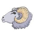 ram farm animal vector image