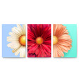 set spring covers with bud flowers close-up vector image vector image