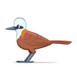white crested laughingthrush bird on a white vector image vector image