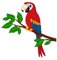 Cartoon red parrot on a branch vector image vector image