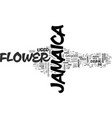 jamaica flower text background word cloud concept vector image vector image
