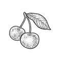 sweet cherry sketch vector image vector image