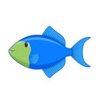 blue triggerfish fish on a white background vector image