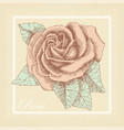 hand drawn rose in a retro style vector image vector image