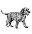 Labrador Retriever 15 vector image vector image