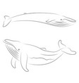 black line whale on white background hand drawing vector image vector image