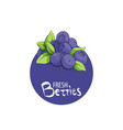 bright blueberry icon vector image vector image