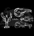 hand drawn lobster in sketch style vector image