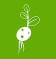 potato sprout from the root icon green vector image vector image
