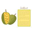 jackfruit exotic juicy stone fruit poster vector image vector image