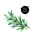 Watercolor hand drawn twig of rosemary Isolated vector image