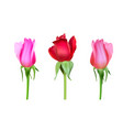 realistic roses bud with stem and leaves closeup vector image
