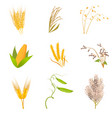 agriculture farm with healthy tasty organic food vector image vector image