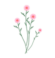 Old Rose Daisy Blossoms on A White Background vector image vector image