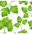 seamless background design with corainder leaves vector image vector image