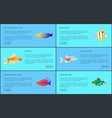 ocean and sea fishes set isolated on blue backdrop vector image vector image