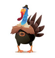 blue head turkey with pilgrim hat character design vector image
