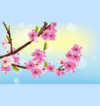 cherry flowers spring card background vector image