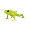 green frog amphibian animal on vector image