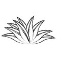 plant leaves natural tropical sketch icon vector image vector image