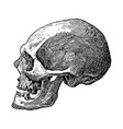 vintage engraving a skull vector image vector image