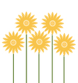 Beautiful Sunflowers isolated on white vector image