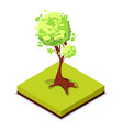 green ash tree isometric 3d icon vector image vector image