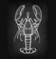 chalk sketch of lobster vector image